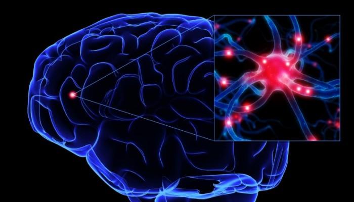 neurons51-800x600