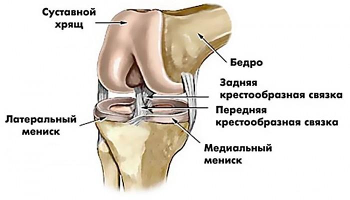 povrezhdenie-meniskov-kolennogo-sustava2