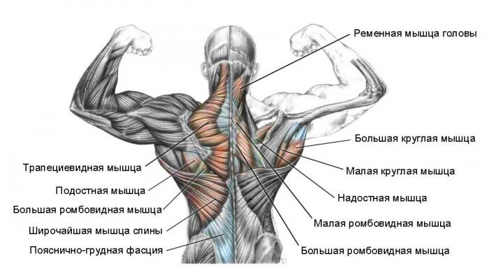 Упражнения в тренажерном при дефартрозе