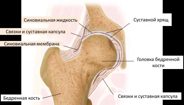 Тазобедренный-сустав