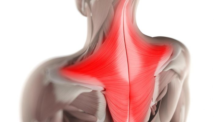 function-trapezius-muscle_4290bb5422360af4