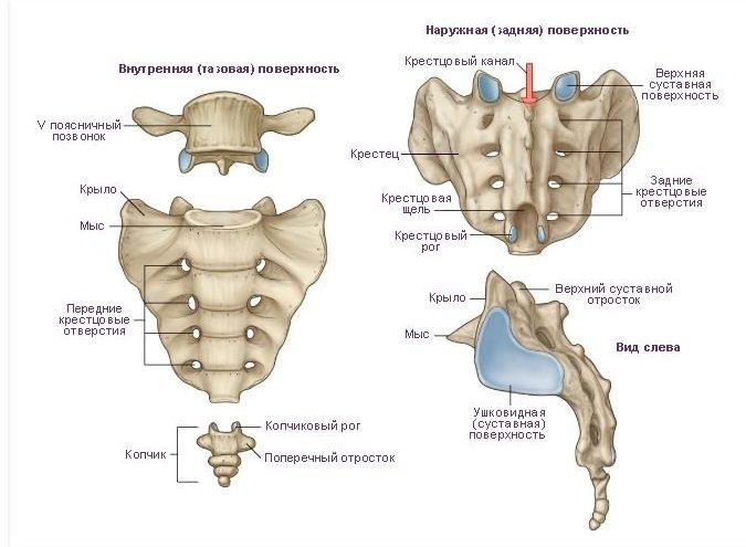artroz-krestcovo-kopchikovogo-sochlenenija-1_1