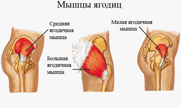 Trenirovka-mishc-yagodits1