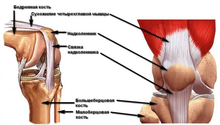 Изображение - Обызвествление коленного сустава лечение Ligamentoz-kolennogo-sustava-700x400