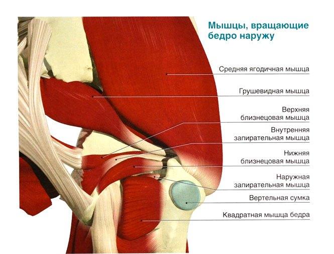 Изображение - Показать тазобедренный сустав на скелете человека O_64