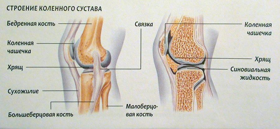 Изображение - Задняя поверхность коленного сустава %D1%81%D1%82%D1%80%D0%BE%D0%B5%D0%BD%D0%B8%D0%B5-%D0%BA%D0%BE%D0%BB%D0%B5%D0%BD%D0%B0