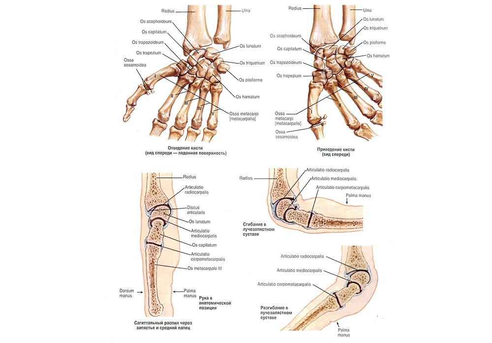 anatomy209