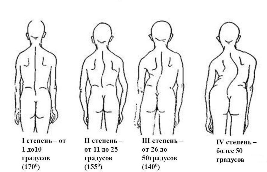 Строение человека внутренние органы со спины фото
