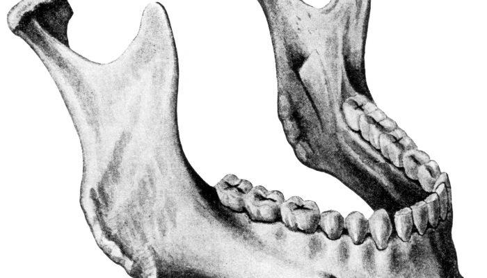 Изображение - Верхнечелюстной сустав анатомия 14-700x400
