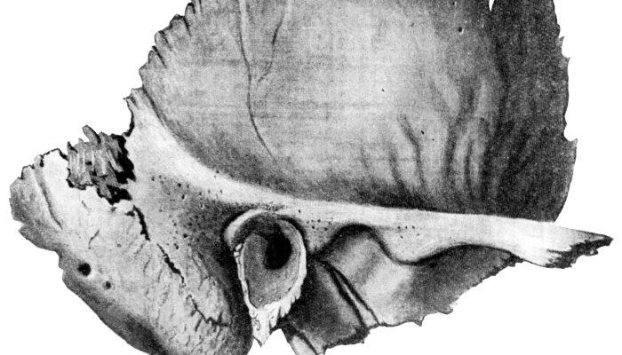 Изображение - Верхнечелюстной сустав анатомия 2-700x400