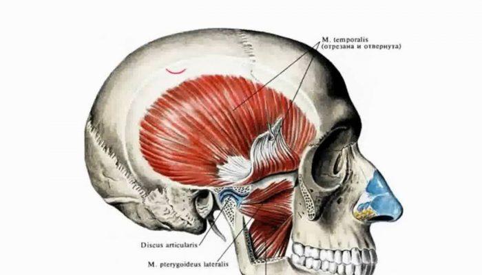 Изображение - Верхнечелюстной сустав анатомия maxresdefault-3-700x400