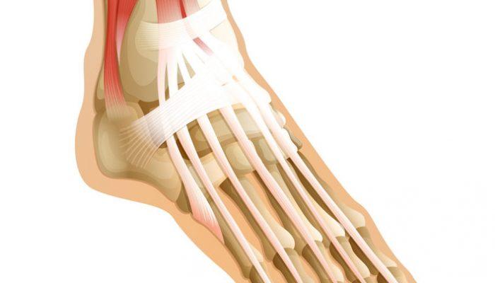 Изображение - Что такое связки сухожилия суставы da461__yuuuuu-700x400