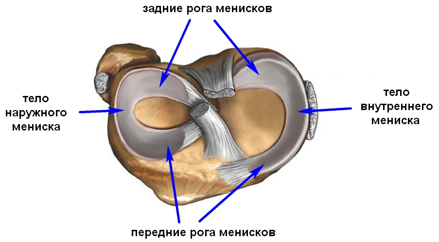 Изображение - Синовэктомия коленного сустава реабилитация meniski_kolena2