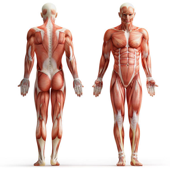 Изображение - Что такое связки сухожилия суставы sukhozhiliya